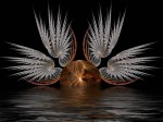 White_Wings__by_Thelma1.jpg